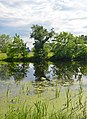 Гнілецька верба, на березі озера Гнилуша 01.jpg