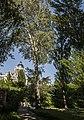 Група вікових дерев тополі білої 15.jpg