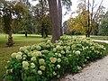 Гёдёллё, Королевский дворец, парк 2010-09-25 Интересная растительность - panoramio.jpg