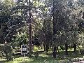Дендрологічний парк Інституту зрошуваного землеробства НААН.jpg