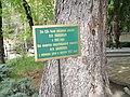 Ель у дачи Ф.И. Шаляпина, Кисловодск, Ставропольский край.jpg
