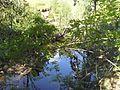 Лесной ручей - panoramio (5).jpg