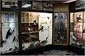 Мінск. Музей прыроды. Экспазіцыя.jpg