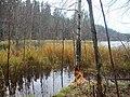 Озеро Дубовое. Здесь живут бобры. - panoramio.jpg