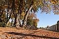 Парк палацу Розумовського біля воріт.jpg