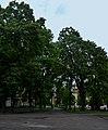 Парк XIX століття DSC 0102.jpg