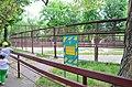 Платан Станчинського у Києві. Фото 6.jpg