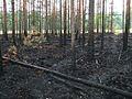 Сгоревший лес - panoramio (2).jpg