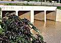 Сезон дождей в Бенгашире. Ливия.jpg