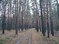 Тропинка в лесной чаще.jpg