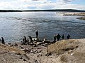 Устье канала каскада нивских ГЭС. Приплыли тюлени. - panoramio.jpg