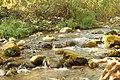 המים שוטפים את הסלעים והאבנים בנחל.jpg