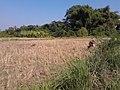 หมู่บ้าน นาพิพาน ต.ปะโค เมือง หนองคาย - panoramio (1).jpg