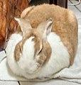 在休息的兔子.jpg