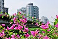 广州街景 - panoramio (3).jpg