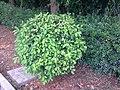 我家小区的一棵小树1 - panoramio.jpg