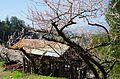 賀名生梅林 2014.3.28 - panoramio.jpg