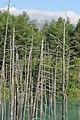 青い池から十勝岳を望む - panoramio.jpg