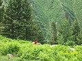 - panoramio (3303).jpg