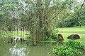 030 Banyan Tree (39571371255).jpg