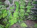 04566jfPulilan Butterfly Gardens Moss Larvae Bulacanfvf 30.JPG