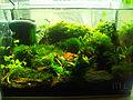 12-Liter-Aquarium.jpg