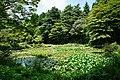 170811 Rokko Alpine Botanical Garden Kobe Japan11s3.jpg