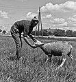 1966 Domaine expérimentale de La Sapinière à Bourges-68-cliche Jean-Joseph Weber.jpg