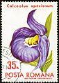 1971. Calceolus speciosum.jpg