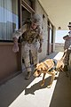 1st Law Enforcement Battalion Trains with Military Working Dogs Daily to Strengthen Communication Between Handler and K-9 160815-M-ZZ999-076.jpg