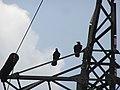 2005-2010. Птицы Донецка (C-740) 50.jpg