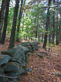 2007 Marlborough State Forest stone wall Massachusetts 2045104433.jpg