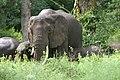 20090507-TZ-NGO Safari 335 (4678012164).jpg