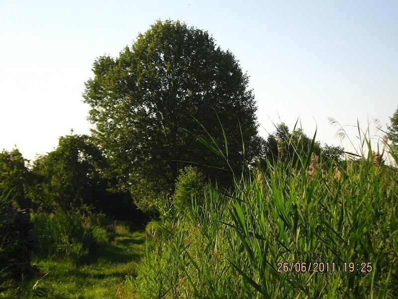 File:2011-06-26-192530 49,041589, 8,017881.JPG - panoramio.jpg