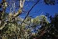 2012-10-26 13-14-38 Pentax JH (49282532767).jpg