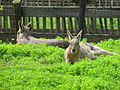 20120802 Zoo Zonnegloed (50).JPG