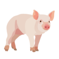 201408 pig.png