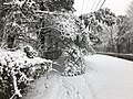 2018-03-21 12 38 42 View south along a snow-covered walking path along Lees Corner Road (Virginia State Route 645) between Virginia Willow Drive and Thompson Road in the Franklin Glen section of Chantilly, Fairfax County, Virginia.jpg