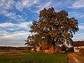 20201031 1621 Dorfbäume in Untereschlbach.jpg