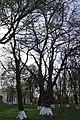 68-247-5014 базалія липи біля лікарні.jpg
