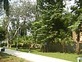 71Mehan Garden Ermita Manila Universidad de Manila 35.jpg