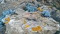 83230 Bormes-les-Mimosas, France - panoramio (373).jpg