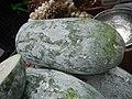 9725Lemon textures and Benincasa pruriens 06.jpg