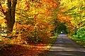 A Morayshire autumn near Pitgaveney House. - geograph.org.uk - 274013.jpg