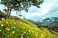 A Mountain of Flowers.jpg