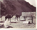 A camel caravan emerging from the Khyber Pass into India, early 1940's.jpg