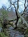 A fallen tree blocks the path - geograph.org.uk - 725260.jpg