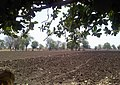 A farm in Hingna Balapur (New) - panoramio.jpg