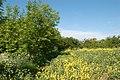 A fertile corner south of Broadwell - geograph.org.uk - 1317885.jpg
