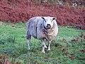 A shig or a peep^ - geograph.org.uk - 1566879.jpg